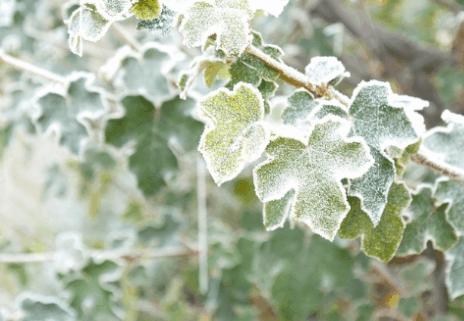 Ce que l'épisode de gel en avril nous dit du réchauffement climatique ?